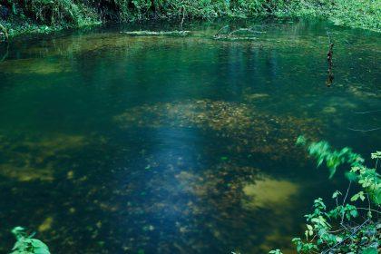 tarlisko pstrąga potokowego
